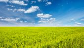 Splendid green field with white fluffy clouds. Location place Ukraine, Europe. Scenic image of agrar poster