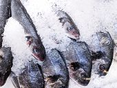 Close Up, Fresh Organic Fishes: Sea Bream And Sea Bass On Ice On Fresh Market,  Background. Sea Fish poster