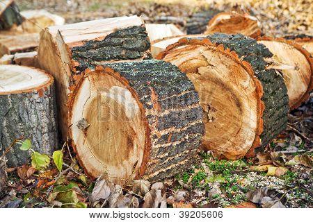 Biomass Firewood