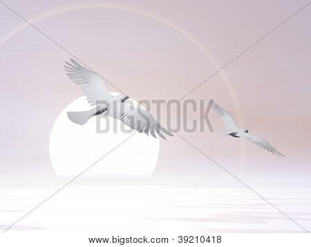 Free Doves - 3D Render