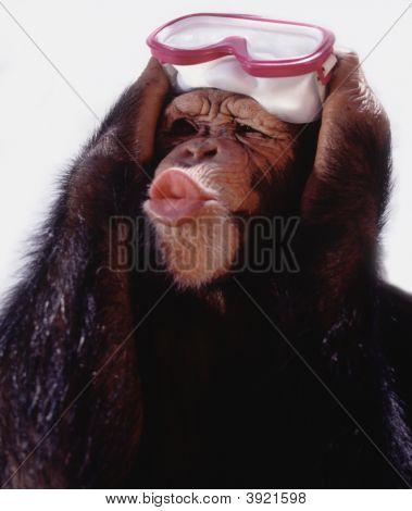 Nadador chimpanzé
