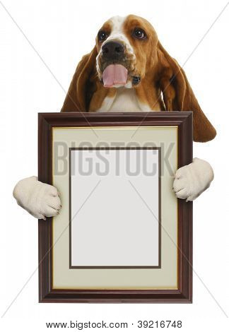 dog holding blank picture frame isolated on white background