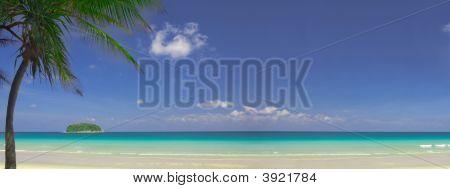 Tropic View