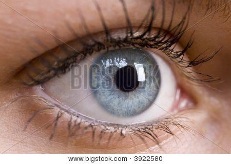 Beautiful Blue Eye