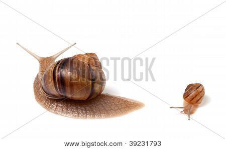 Family Of Snails