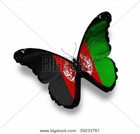 Afghani Flag Butterfly, Isolated On White
