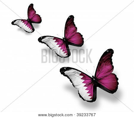 Three Qatari Flag Butterflies, Isolated On White