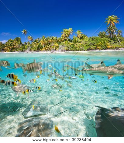 Beautiful tropical island above and underwater