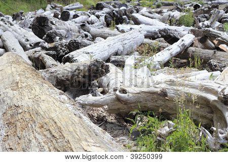 Lots Of Driftwood