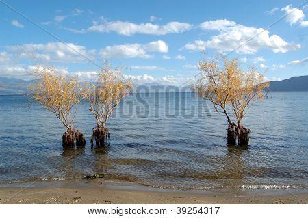 willows in lake prespa in macedonia