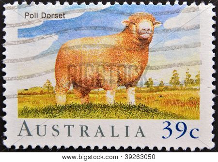 AUSTRALIA - CIRCA 1989: A stamp printed in Australia shows Poll Dorset Sheep circa 1989