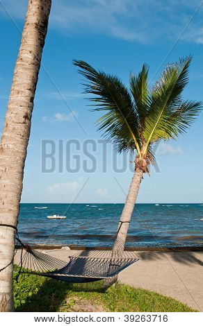 Hammock On Palm Trees