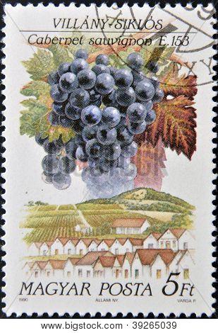 HUNGARY - CIRCA 1990: A stamp printed in Hungary shows fruit grape Cabernet sauvignon circa 1990