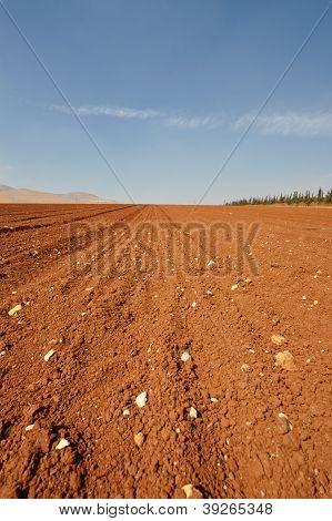 Após a colheita