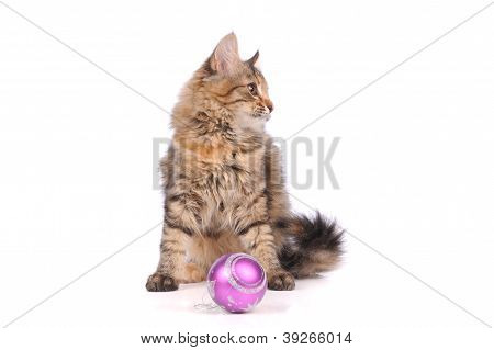 Funny Cat With Christmas Toys Isolated On White