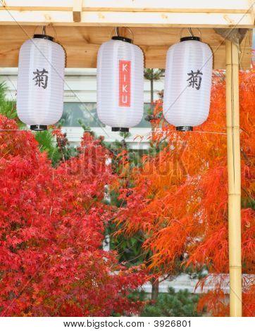A Japanese Kiku Flower Show