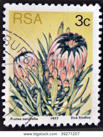 SOUTH AFRICA - CIRCA 1977: A stamp printed in Republic of South Africa shows the Sugarbush (Protea n