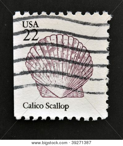 UNITED STATES OF AMERICA - CIRCA 1985: A stamp printed in USA shows the Calico Scallop circa 1985