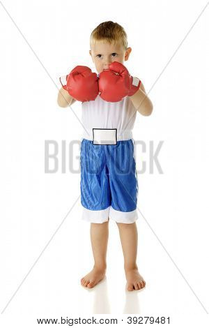 An adorable barefoot preschool boxer standing ready in his short and gloved fists.  On a white background.