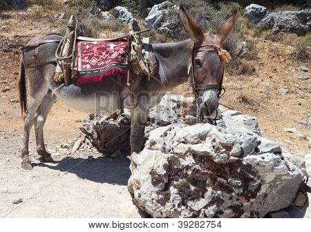 Donkey resting at Crete island in Greece