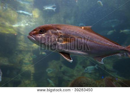 Aquarium of Crete in Greece