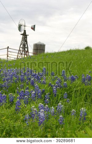 Texas Windmill On Hillside With Bluebonnets