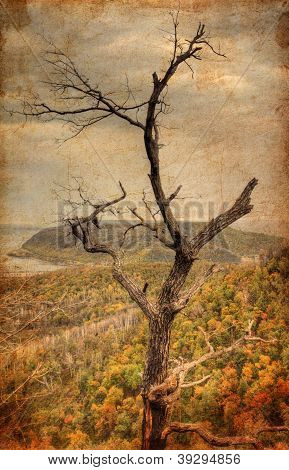 Brown Tree On Mountain Autumn Landscape