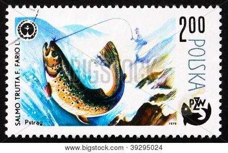 Postage stamp Poland 1979 Trout, Salmo Troutta, Fish