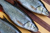 stock photo of chub  - Fresh fishes on wooden cutting board closeup - JPG