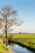Typical Dutch Polder Landscape With A Windmill