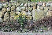 image of fieldstone-wall  - The Frisian stone wall is a dry stone wall typical for Northern Germany - JPG