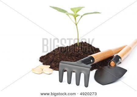Transplant Of A Tree
