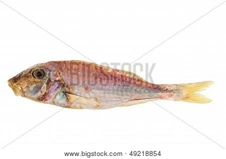 Salted and dried Red mullet fish
