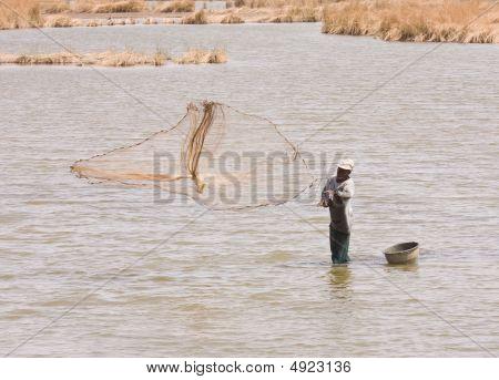 Wetland Fisherman In The Gambia