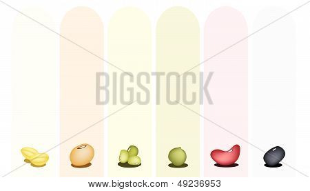 Set Of Different Beans On Multicolor Banner