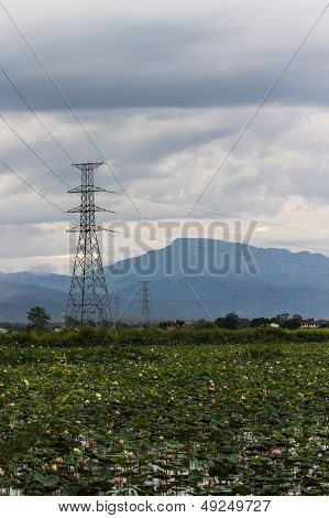 High Voltage Power Pole And Pink Lotus In Swamp Of Nature