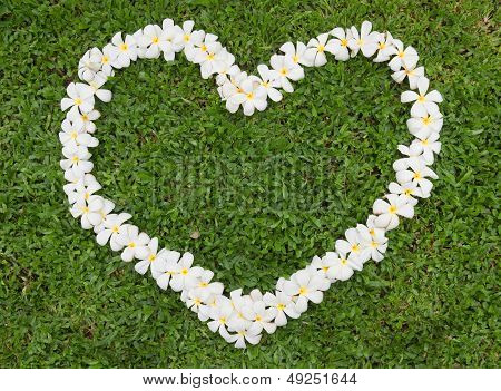Plumeria Heart