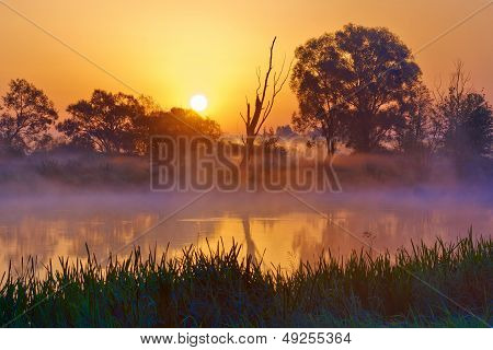 Beautiful Foggy Sunrise Over The Narew River.
