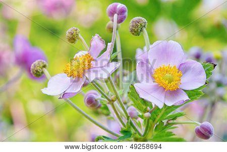 Lila Flowers, Macro