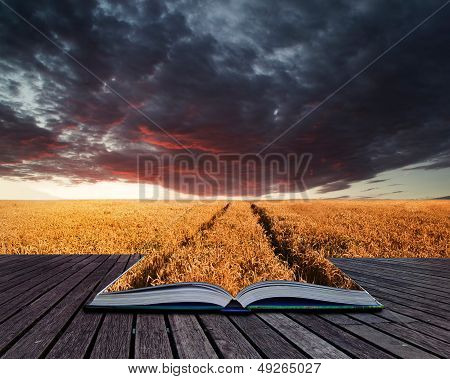 Creative Concept Pages Of Book Stunning Wheatfield Landscape Summer Sunset Under Moody Stormy Sky