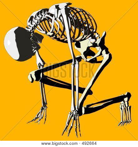 Bone 143