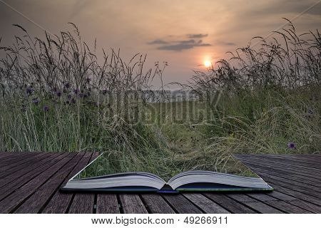 Creative Concept Pages Of Book Sunrise Landscape In Summer Looking Through Wild Thistles And Grass