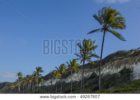 Palm Trees And A Blue Sky