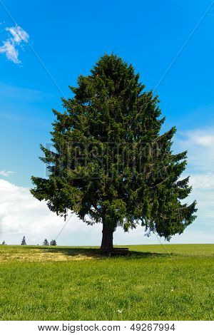 Landscape - lonely pine tree on green field, park bench