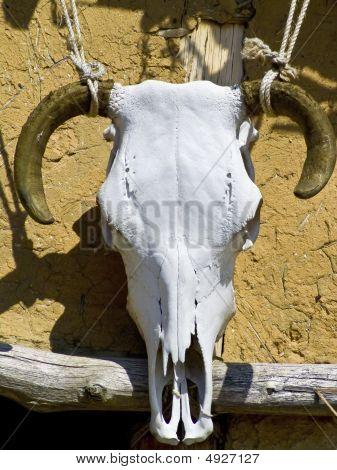 Um crânio de touros usado como decoração em uma casa de casa de campo
