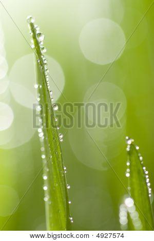 Macro Of Wet Grass