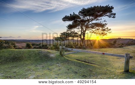 Sunset At Bratley View In The New Forest