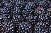 stock photo of blackberries  - Sweet blackberries close - JPG