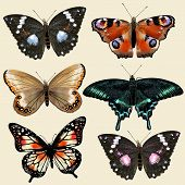 Set Of Vector Colorful Realistic Butterflies For Design