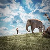 stock photo of wild adventure  - A young girl is walking a big elephant on a wild landscape with other animals following on a path to protection or freedom - JPG